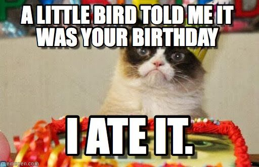 Funny Birthday Meme Cats : Grumpy cat birthday bird meme is my friend