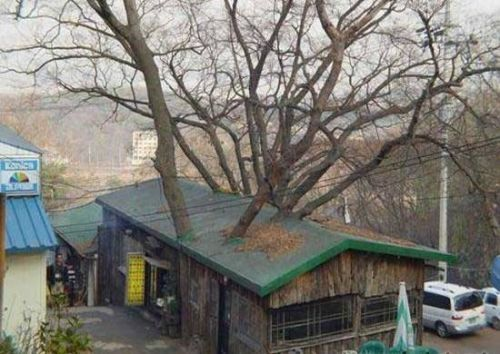 7 Amazing Houses Built Into Nature: 83 Best Unusual Trees Images On Pinterest