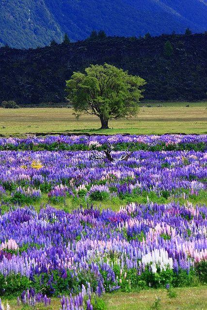 信じられないほどの写真|ミルフォードサウンド、ニュージーランドへの道