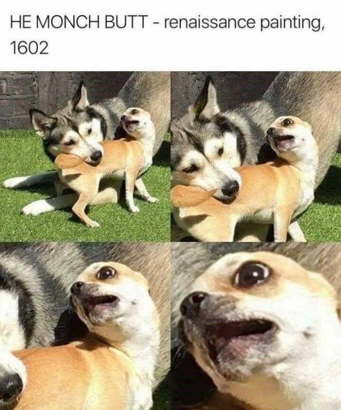 These 20 Classical Art Memes Featuring Animals Are Better Than Going To The Museum Funny Animal Memes Funny Dog Memes Animal Memes