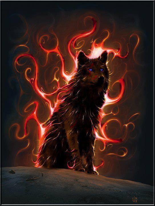 wolf- Magnifique image de loup.