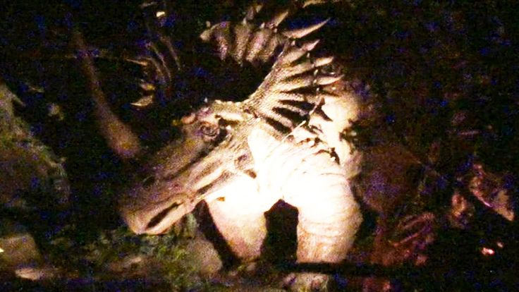Backyard Pov At Night : Dinosaur Ride Front Seat (HD POV) NightVision Disneys Animal Kingdom