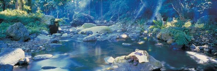 Coomera River on the Illinbah Cirquit in Binna Burra, Lamington National Park, Gold Coast. This beauty is part of the Gondwana Rainforests of Australia World Heritage Area #goldcoast #nationalparks