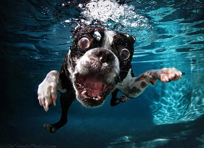 These Photos Of Underwater Dogs Are Out Of This World! Which Is Your Favourite?