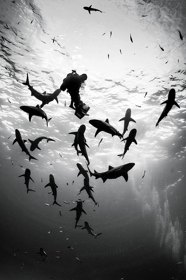 Thinking about a shark dive? Here are five tips from a professional shark wrangler to help you decide if you're ready!
