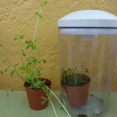 De què li serveix la fulla a l´arrel? Projecte científic per a cicle mitjà de Jesús Chivite Pérez, lligat al treball a l´hort escolar i amb molta experimentació sobre les plantes. Una bona exempli…