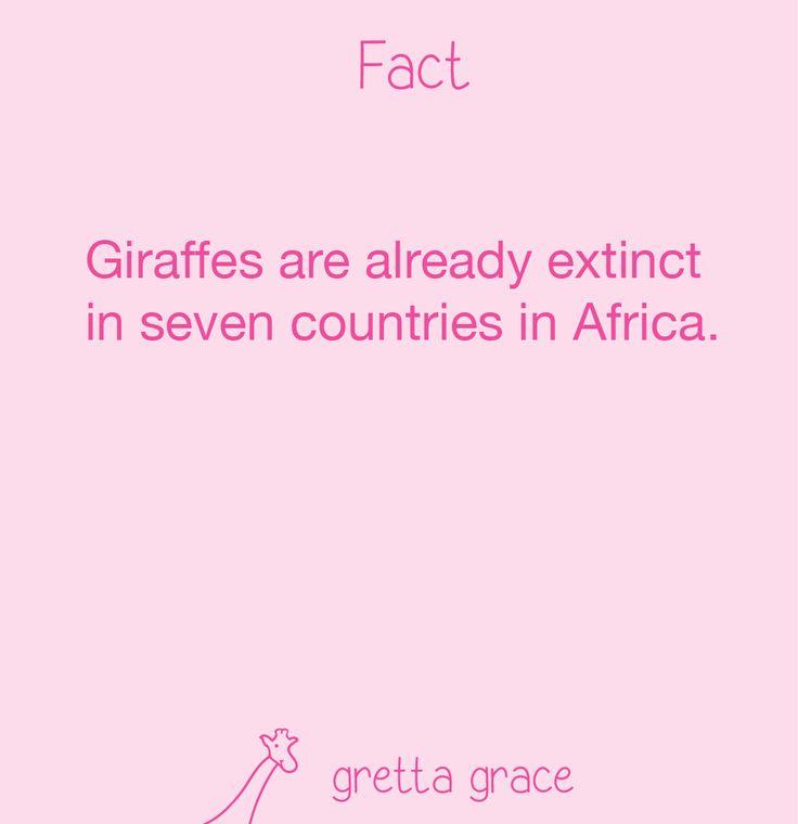 #giraffe #fact #funfacts #giraffes