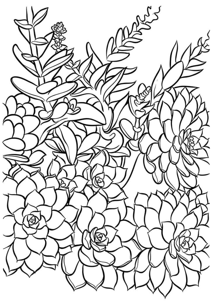Succulent Coloring Card - Free Printable! | Coloring pages ...