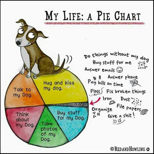 Yes, this would be my pie chart - Annie