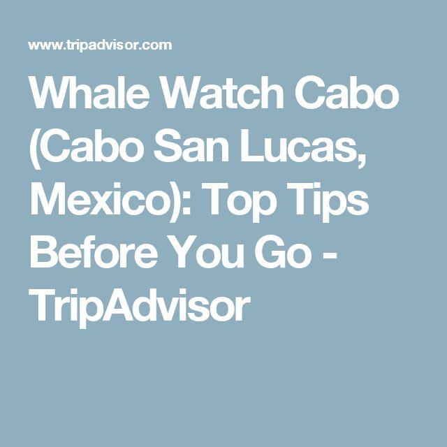 Whale Watch Cabo (Cabo San Lucas, Mexico): Top Tips Before You Go - TripAdvisor