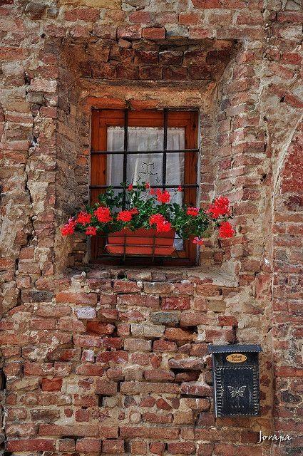 Hermosas flores en la ventana