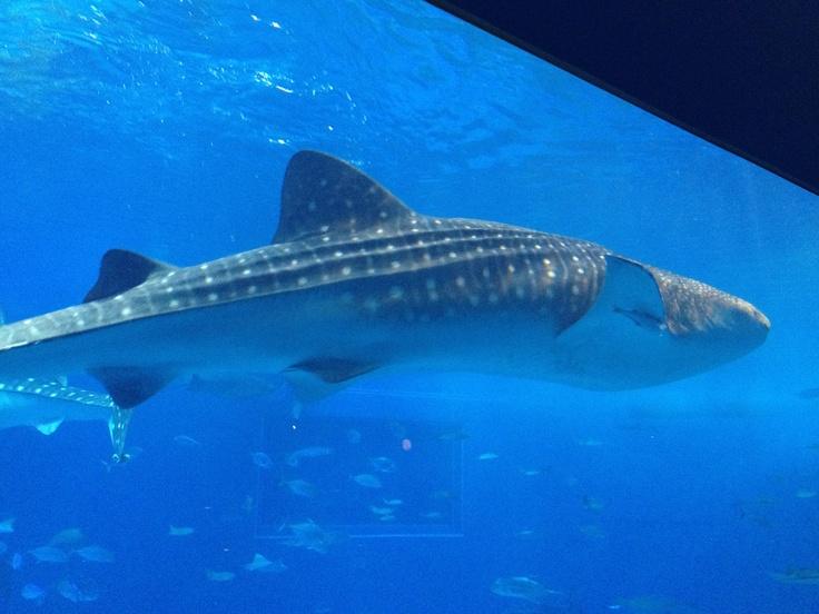 美ら海水族館 2012_2