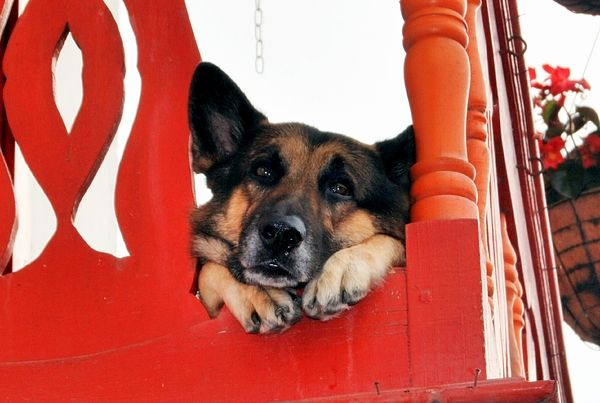 Free sad dog