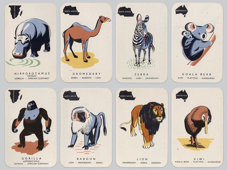 Animal Cards (1950s)
