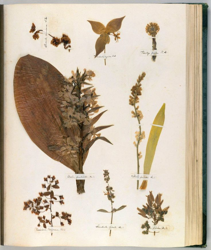 Popular Emily Dickinson us Herbarium A Forgotten Treasure at the Intersection of Science and Poetry
