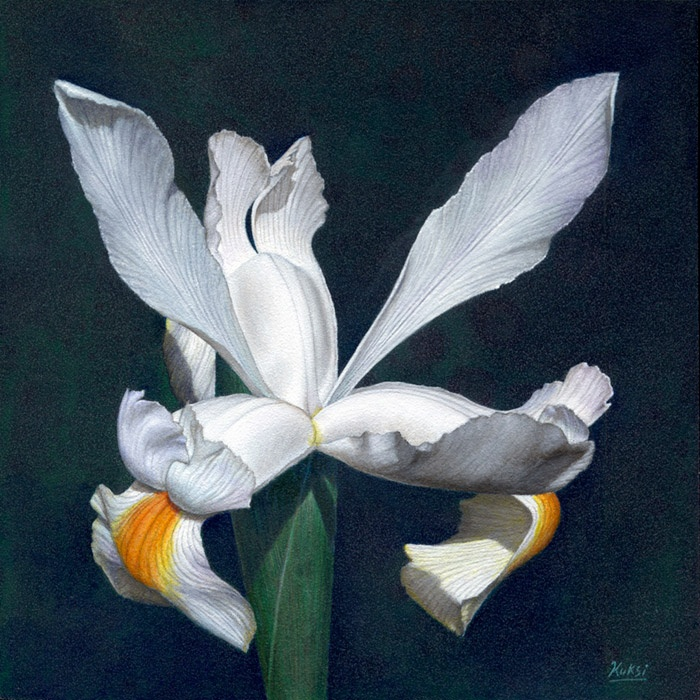 'White Iris' painting by Kris Kuksi