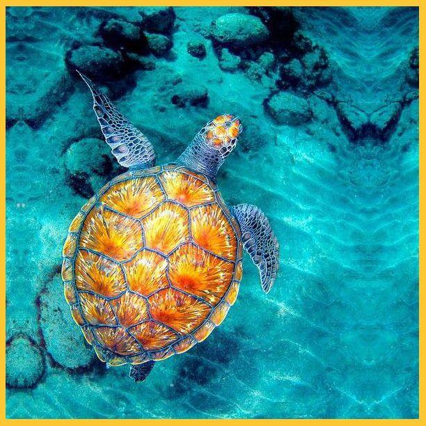 Απίθανο??? Το κέλυφός της δε μοιάζει με κοράλι?  #graffitisa #graffiti #oceanlife #sea #colour #turtle