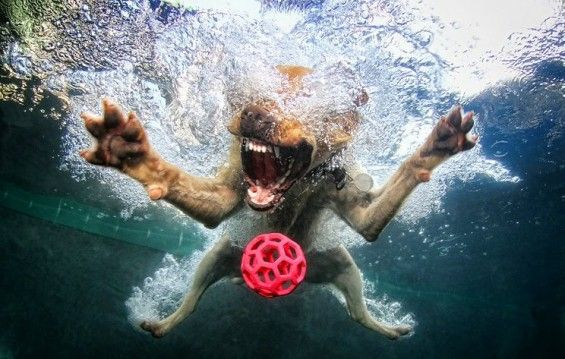 nderwater dogs by Seth Casteel