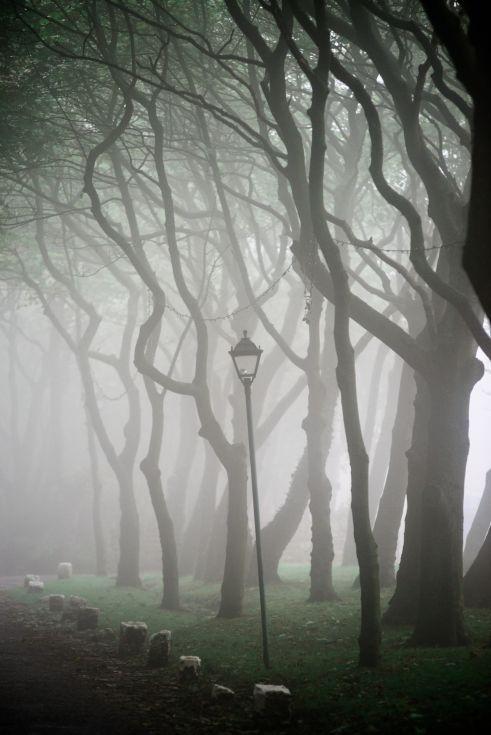 ARTFINDER: Spooky Trees by Dean Weston - Rain and sea mist shroud an avenue of trees near the coast at Ravenscar, North Yorkshire.