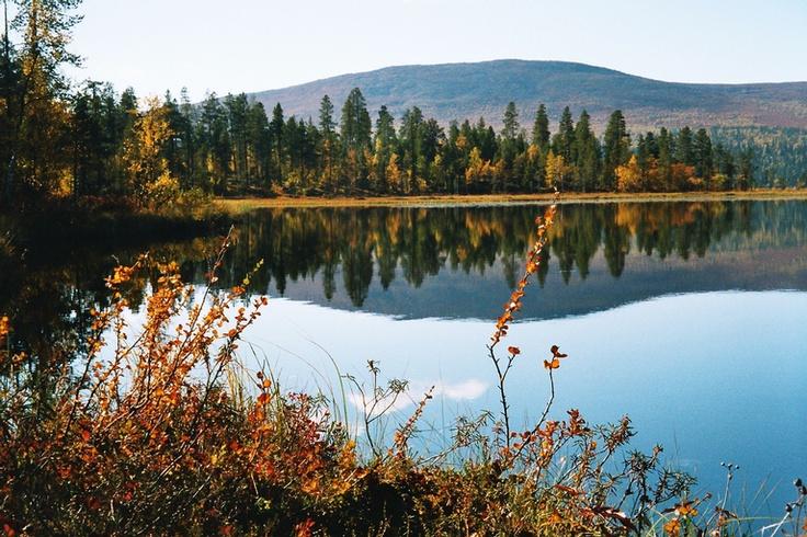 Autumn colours in Raattama, #Lapland.