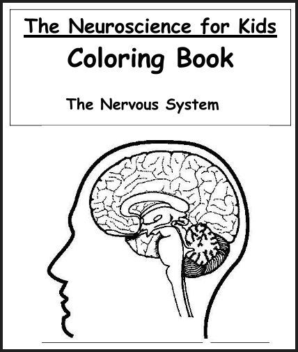 nervous system coloring pages free - photo#8