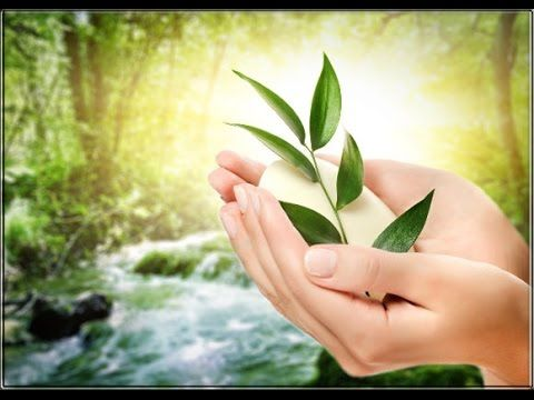 Olive Leaf Tea Benefits - World Of Herbal Health