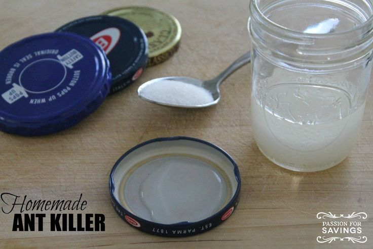 Homemade Ant Killer! Easy DIY Recipe for All Natural Aunt Trap