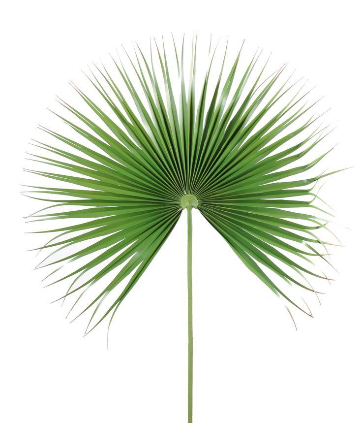 Palme feuille de palmier camerus - Diamètre 100cm -palmier artificiel