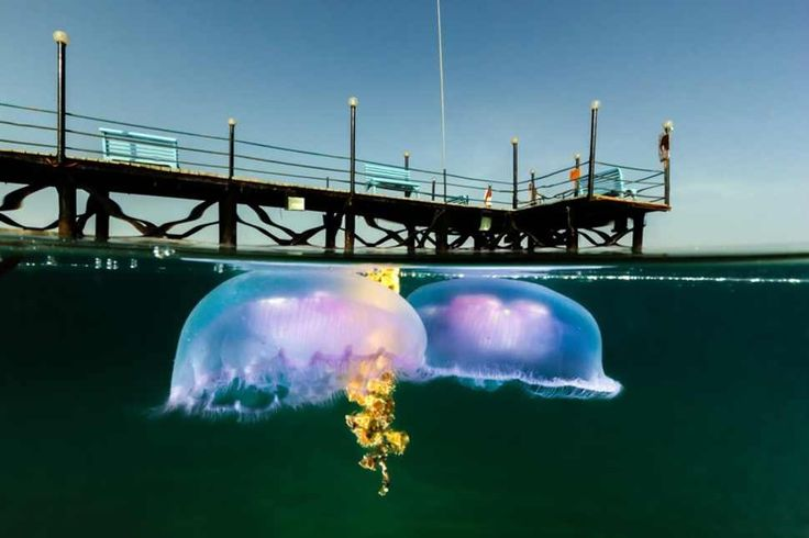 25фотографий награни двух миров: под водой инад ней
