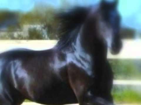 Na čiernom koni - Iva Bittová a Jana Kirchner