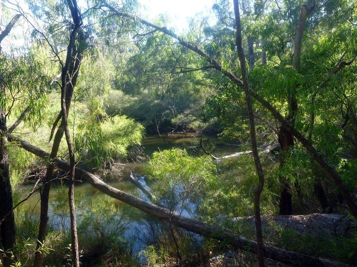 Margaret River'sHidden Campsites amongst the trees