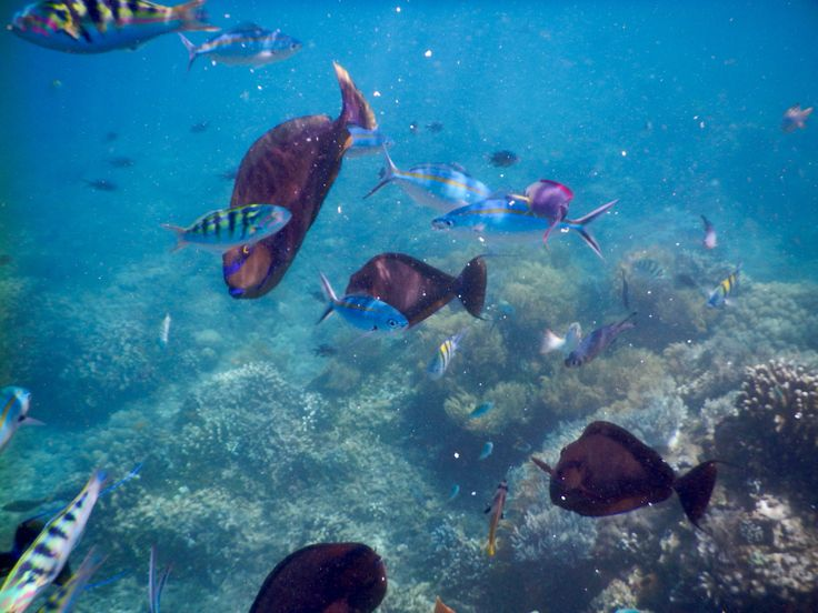 swimming with the fishes off Amed in bali