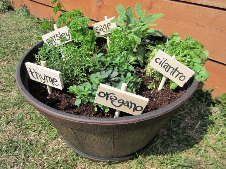 garden on pinterest organic herbs herbs garden and patio gardens