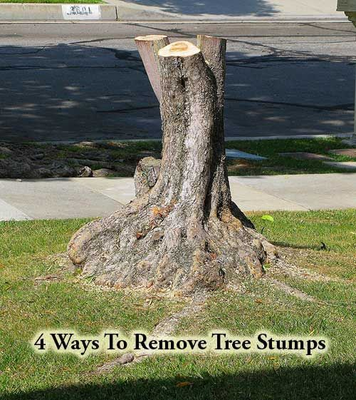 This Would Make A Great Fairy Tree House Complex. Donu0027t Get Rid Of It! 4  Ways To Remove Tree Stumps If You Have Recently Cut Down A Tree In Your  Garden, ...