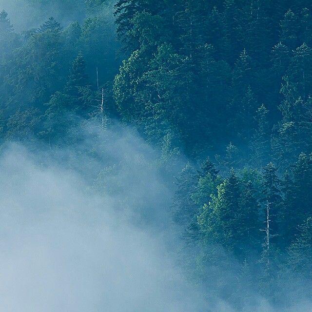 #forest in the #pieniny #mountains www.magdachudzik.pl