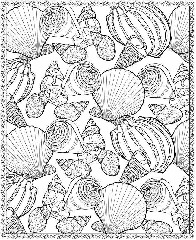 7 seaside colouring pages coloring pages pinterest for Shells coloring page