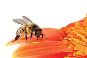 bees are amazing on pinterest raw honey honey bees and bee hives