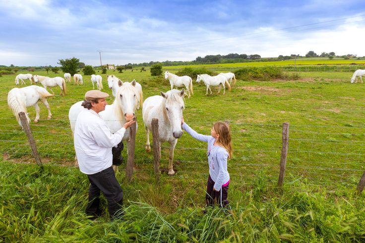 De Camargue is een van de mooiste natuurgebieden van de Languedoc en lijkt wel een beetje op ons Hollandse polderlandschap. Op deze prachtige plek vind je roze flamingo´s, wilde Camargue paarden en zwarte stieren.  Meer weten over Languedoc-Roussillon kijk op http://autovakanties.sunweb.nl/frankrijk/languedoc-roussillon