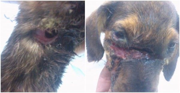 Prosecute Thug Responsible For Mistreating And Severely Injuring A 2-Month-Old Puppy With A Bladed Object! | PetitionHub.org