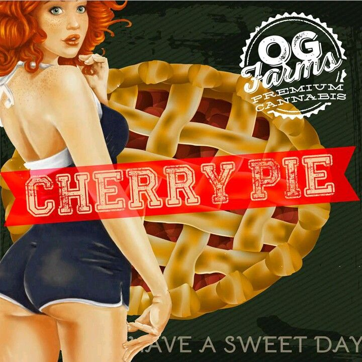 OG Farms Cannabis, Shelton, WA Cherry Pie Strain