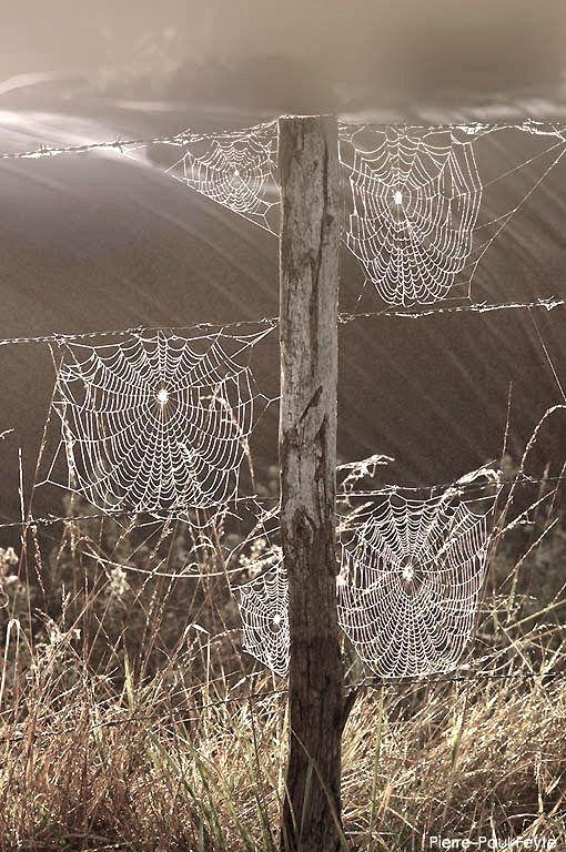 les toiles d'araignées dans le champ