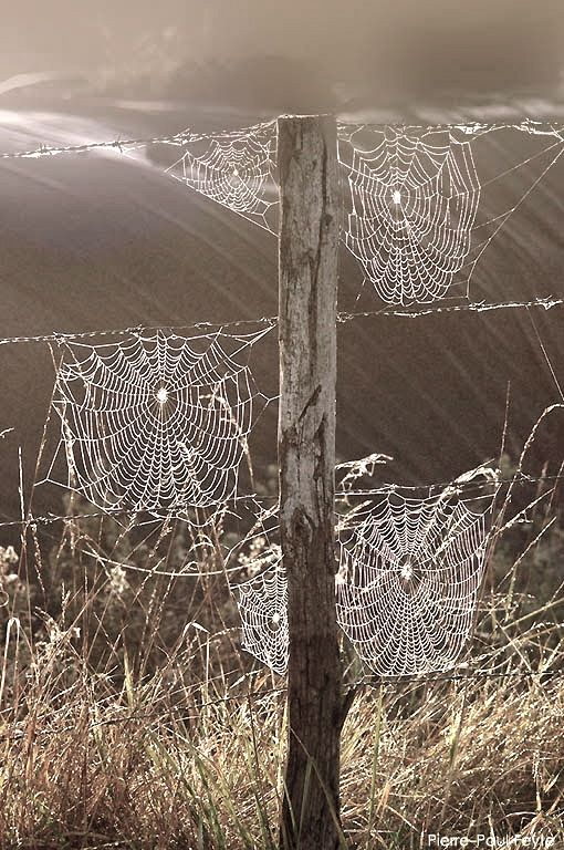"""Each of us is a unique strand in the intricate web of life and here to make a contribution.""  ― Deepak Chopra"