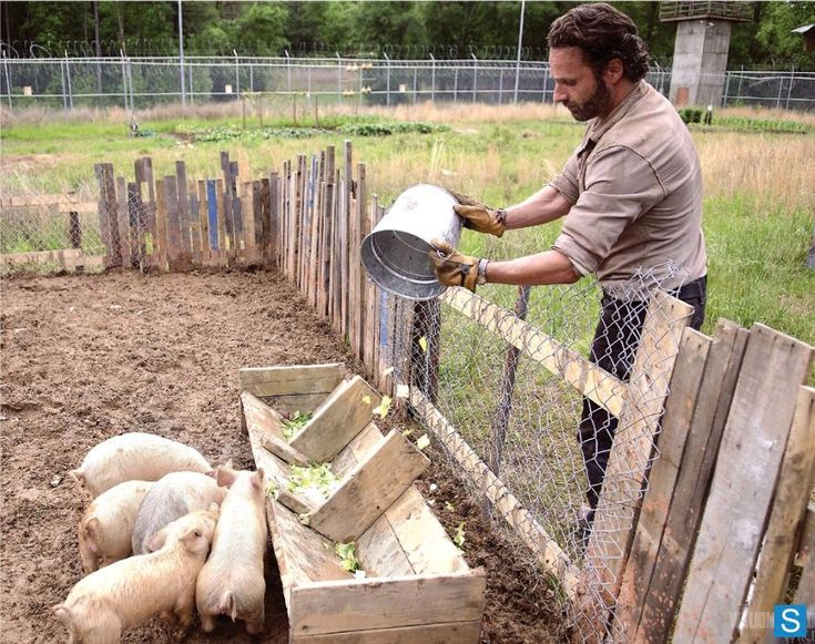 Rick Feeding The Pigs - The Walking Dead