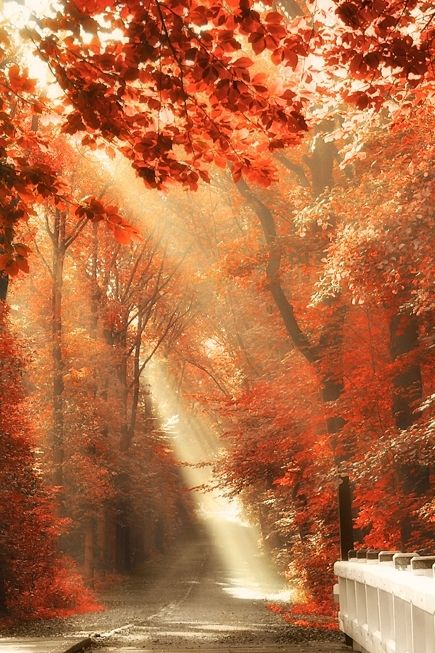 Red leaves and sunbeam on a bridge, Amsterdam Forest, The Netherlands (Photo by Lars van de Goor)