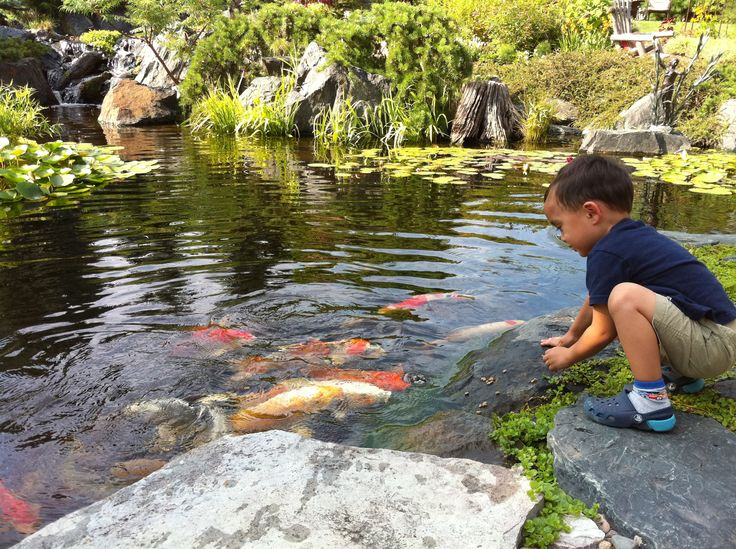 1000 images about ponds for kids on pinterest growing for Pond fish wanted