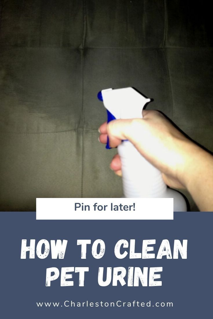 How To Get Dog Urine Out Of Microfiber Couch