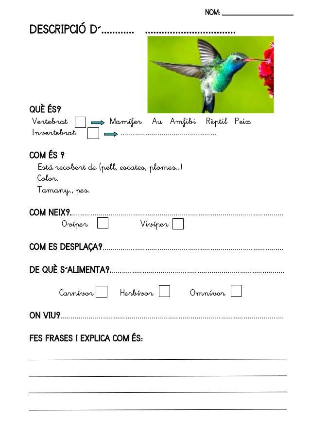 fitxes-llibre-animals-13-638.jpg (638×903)