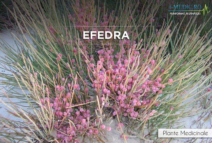 Cateva studii de specialitate au relevat faptul ca efedra este eficienta pentru tratamentul astmului, bronsitei, spasmelor bronsice sau a altor afectiuni respiratorii. http://www.i-medic.ro/plante/efedra