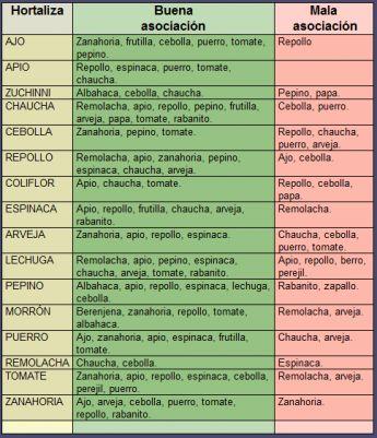 asociacion plantas en el huerto