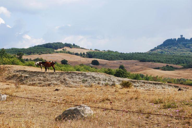 Radicofani - Senese countryside (a special one, with horses and the tower) - Radicofani, Siena, Italy.